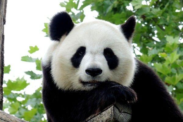 中国フォーカス・ストラテジー:香港株式市場