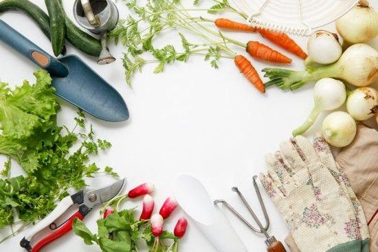 個別株投資は「家庭菜園」。趣味と資産形成の両立を