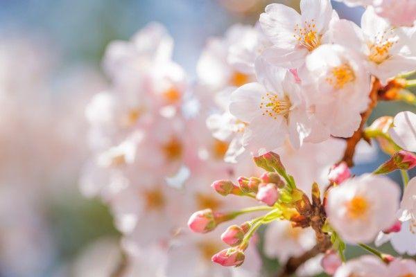 『桜の開花』と景気の関係