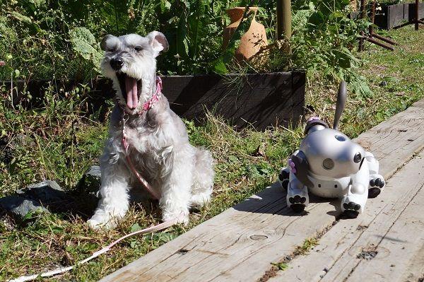 SONYがペットロボット・AIBOを発売【1999(平成11)年6月1日】