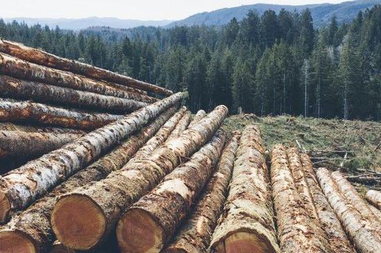 FXトレードテクニックと木材先物相場(米国株の先行指標)