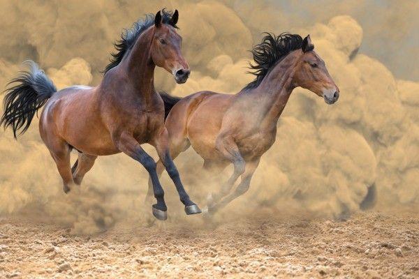 荒れ馬を乗りこなす「積み立て」投資術。荒れれば荒れるほど投資効果が高まる